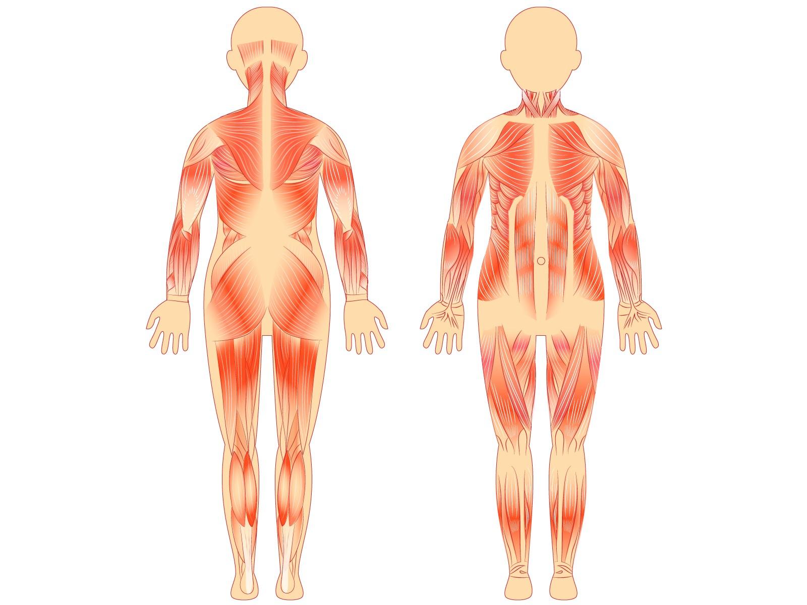 筋膜リリースで筋肉をほぐしましょう